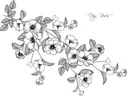 Dog roses flowers drawing illustration on white background.