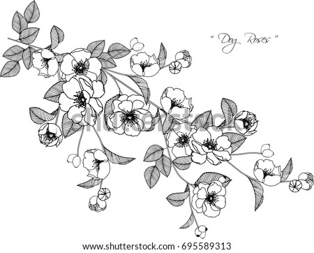 Black and white flowers download free vector art stock graphics black and white background dog roses flowers drawing illustration on white background mightylinksfo