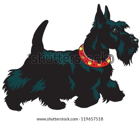 dog scottish terrier breed