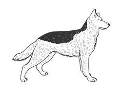 Dog shepherd animal sketch engraving vector illustration. T-shirt apparel print design. Scratch board imitation. Black and white hand drawn image.