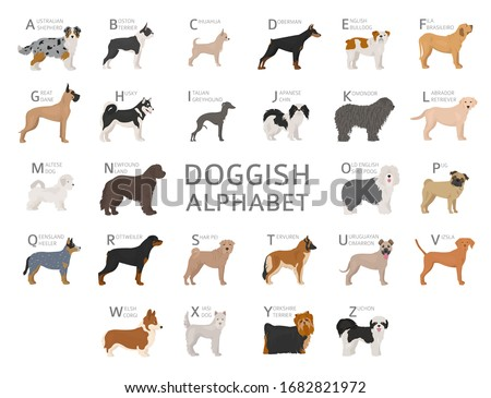 Doggish alphabet for dog lovers. Letters of the alphabet with the names of the dog breeds. Vector illustration