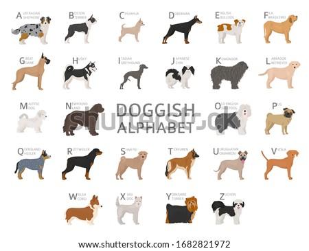 doggish alphabet for dog lovers