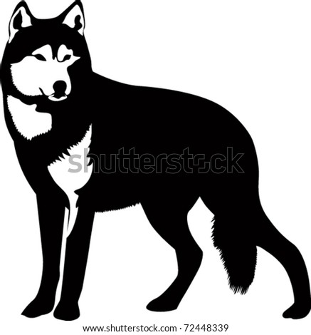dogs a wolf the animal is
