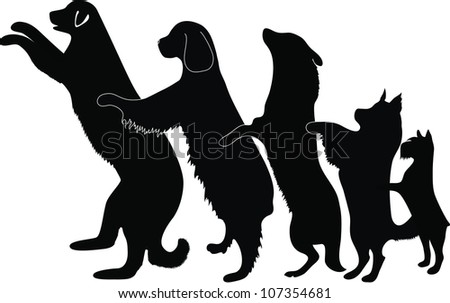 Dogs animals dance