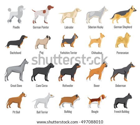 dogs breed vector flat icons