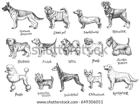 86c8da4a6bee Dogs breeds vector set. Freehand drawing illustration in vintage style.