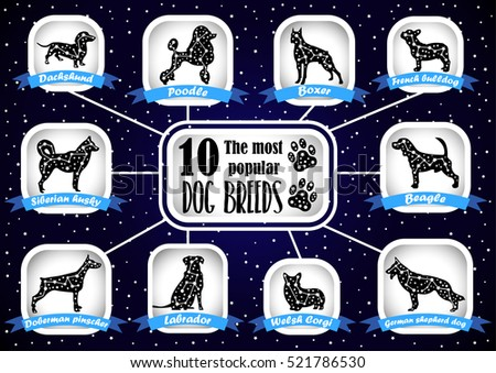 dogs in the constellations dog