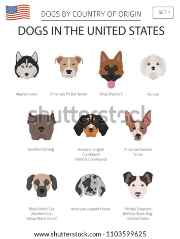 dogs in the united states