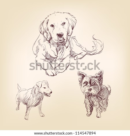 dogs -  set hand drawn  vector illustration  isolated