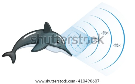 dolphin communicating with