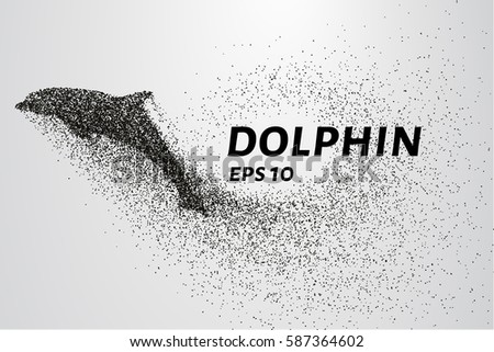 dolphin of the particles the