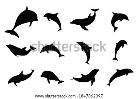dolphin silhouette icon vector