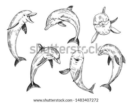 dolphin sketch hand drawn