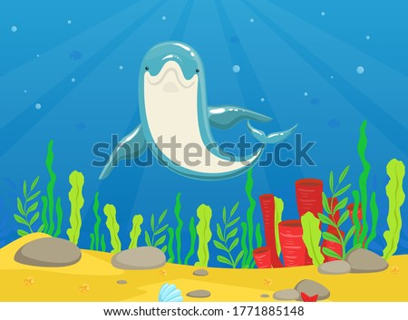 dolphin swimming under the