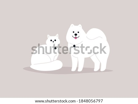 Domestic animals, fluffy white cat and dog wearing medallions, best friends