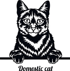 Domestic Cat - Cat breed. Cat breed head isolated on a white background