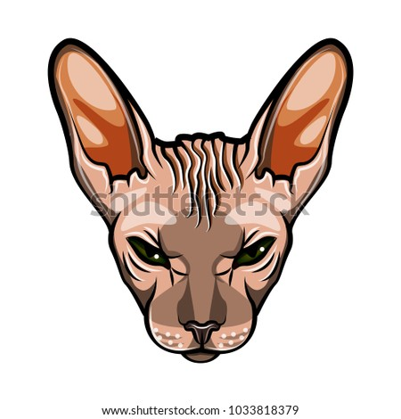 domestic cat s face sphynx