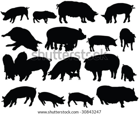 domestic pig silhouette collection - vector
