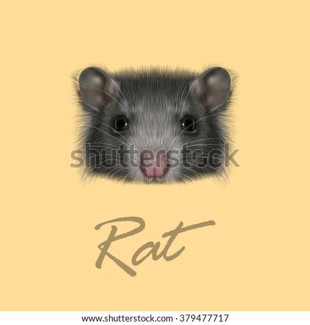 domestic rat portrait vector