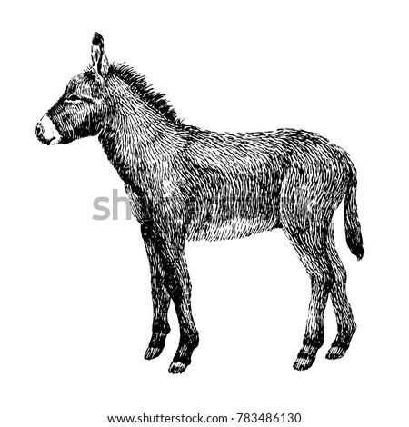 donkey sketch style. hand drawn ...