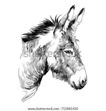 how to draw a donkey video