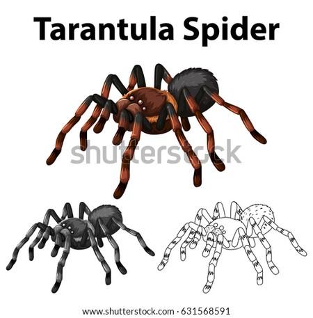 doodle character for tarantula