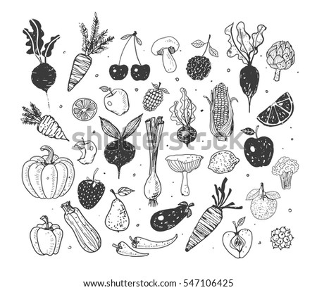 Doodle fruits and vegetables. Vector sketch illustration of healty food.