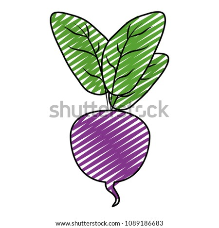 doodle natural beet with leaves organic vegetable