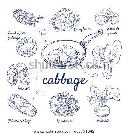 doodle set of cabbage   kale ...