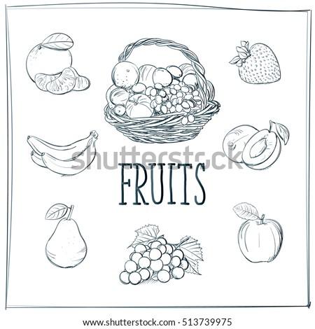 doodle set of fruits