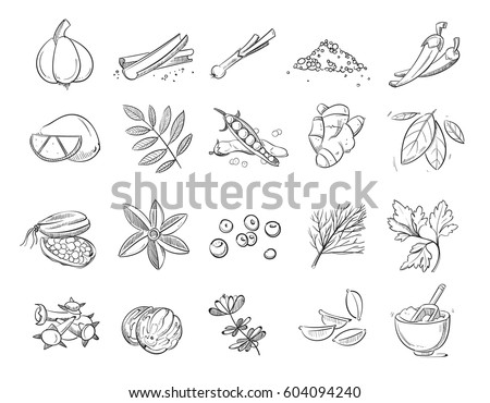 doodle spices and herbs vector