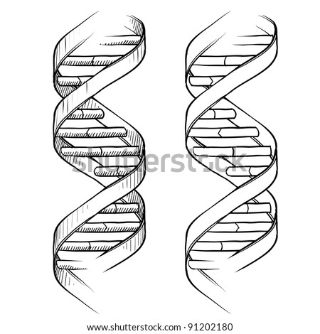 Doodle style genetic DNA double helix illustration in vector format suitable for web print or advertising use.