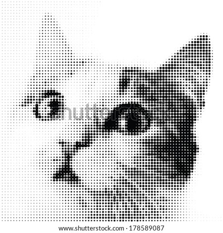 dotted cat watching