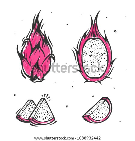Dragon fruit. Exotic mexican fruit in hand drawn style