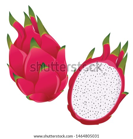 dragon fruit, whole fruit and half. tropical fruits. Vector illustration isolated on white background #1464805031