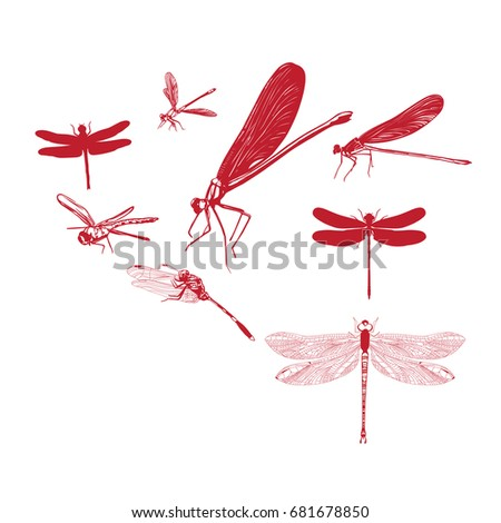 Dragonfly Vectors Photos and PSD files  Free Download