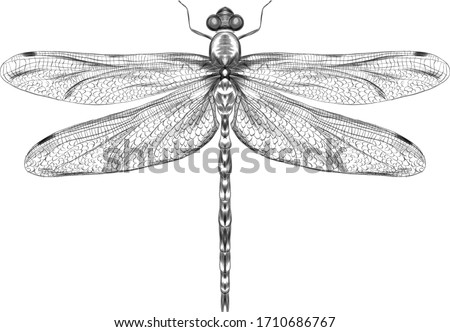 dragonfly black and white