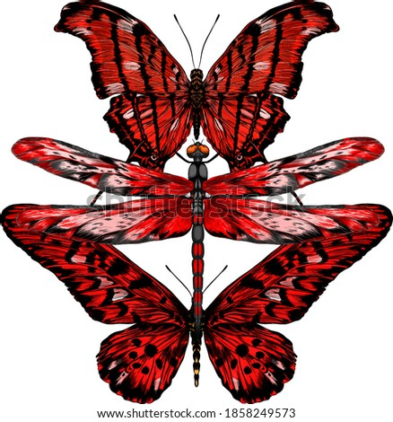 dragonfly black red vector