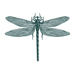 Dragonfly vector engraving hand drawn illustration
