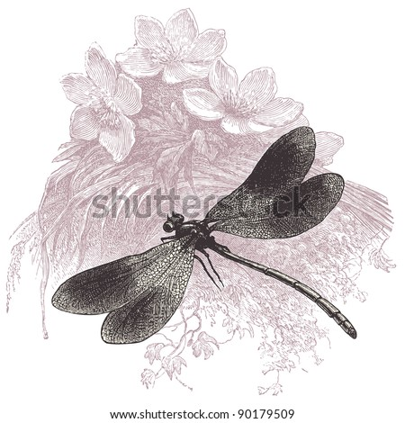 "Dragonfly - vintage engraved illustration - ""Cent récits d'histoire naturelle"" by C.Delon published in 1889 France"