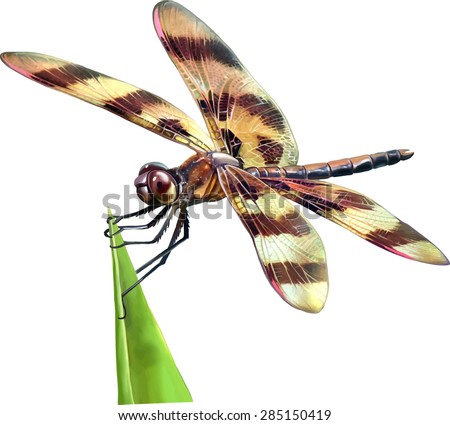 dragonfly with yellow and brown