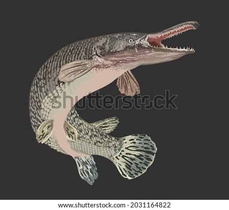 drawing aligator gar, monster fish, art.illustration, vector Photo stock ©