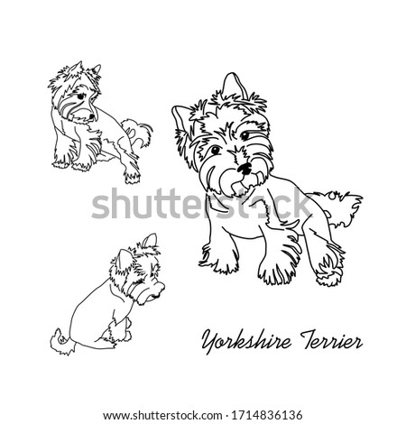 Drawing black and white yorkshire terrier. Outline of a small dog in various poses