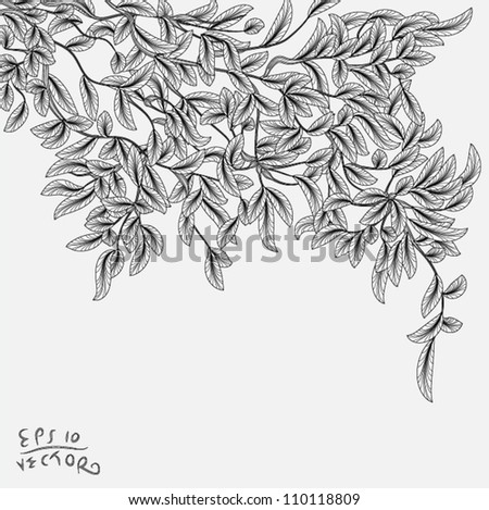 Drawing branch with leaves hanging from the tree, EPS10 Vector background