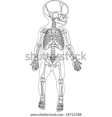 drawing children skeleton