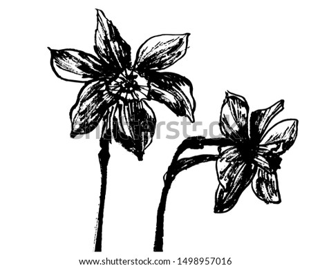 drawing element set two flowers