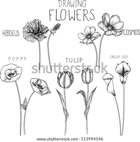 drawing flowers. poppy,tulip,cosmos,calla lily and hibiscus flower.