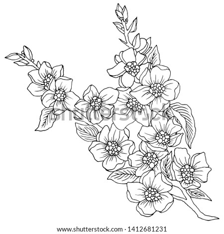 drawing in black and white, branch with flowers #1412681231