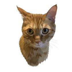 drawing of a cat png, cat face png, cute cat pics, cute drawings, cat illustrations