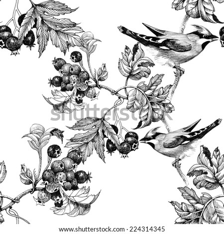 drawing of beautiful birds and